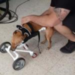 Los mejores artículos – silla de ruedas para 120 kilos que lideran…